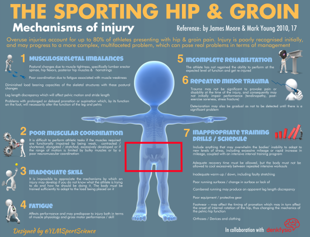 Sporting Hip & Groin.png