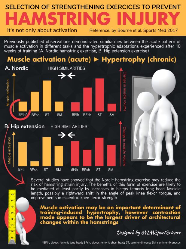 #615.Hamstring Activation Adaptations.png