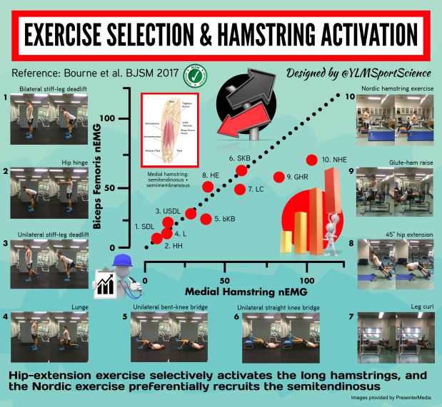 671.Hamstring activation.png